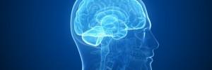 Neurosciences: Obama veut cartographier le cerveau humain